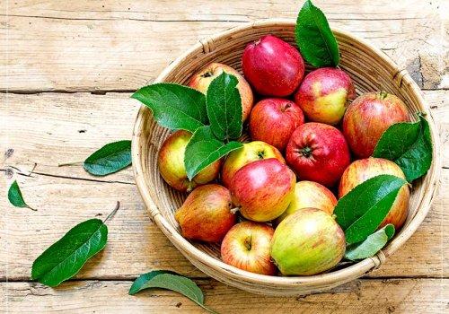 Der Apfel – das beliebteste Obst in Deutschland